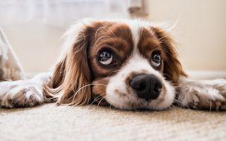 У соседа постоянно лает собака — что делать?