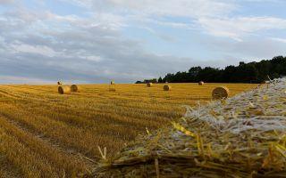 Как оформить право собственности по приобретательной давности на земельный участок?